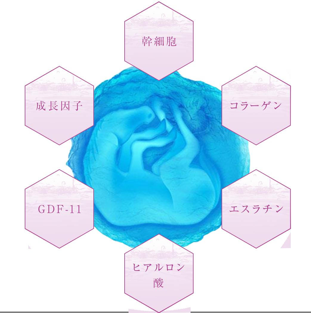 羊膜エキスに含まれる天然の美容成分