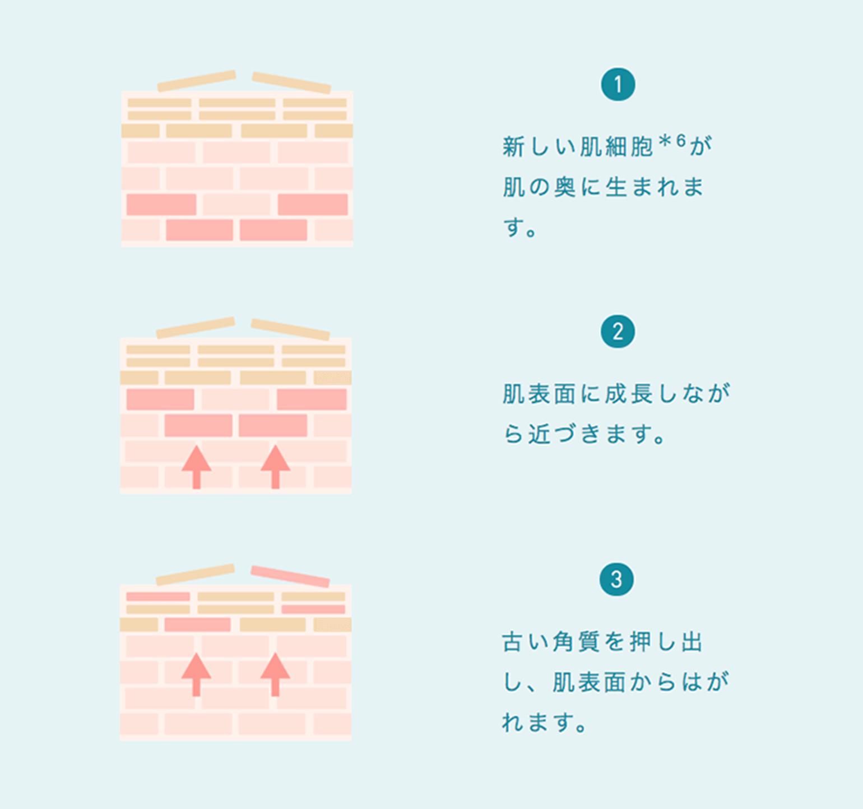 肌のターンオーバーイメージ